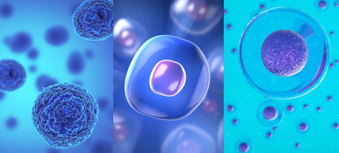 donde estan las celulas madre