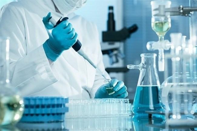 trasplante de celulas madre adultas