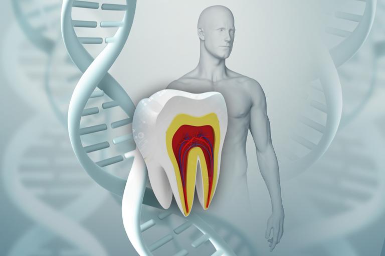 celulas madre dientes españa