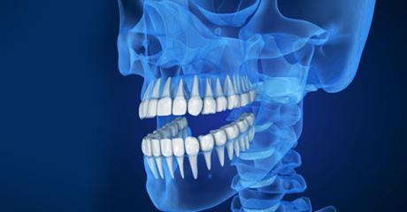 celulas madre para dientes