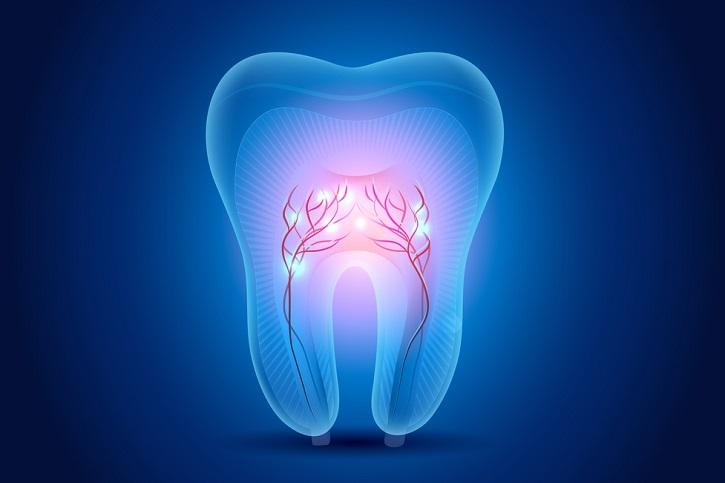 celulas madre dientes nuevos 2017