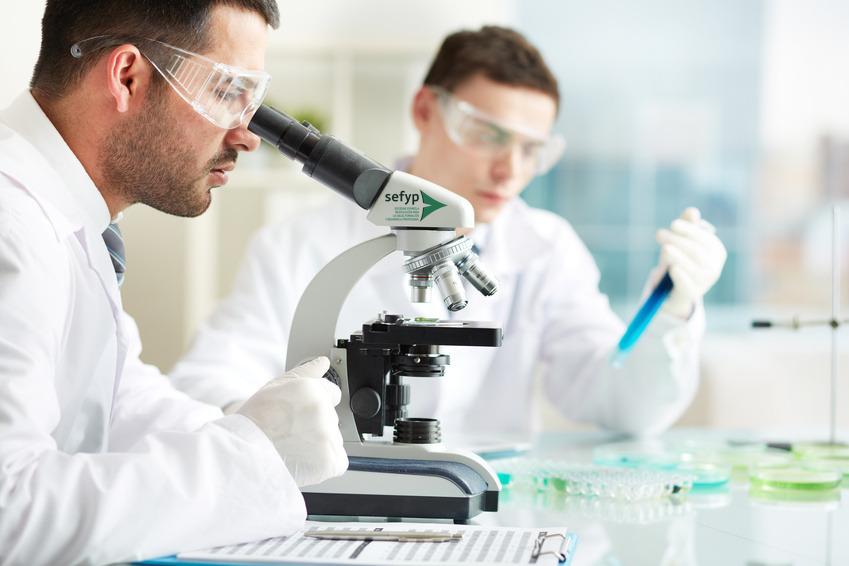células madres multipotenciales