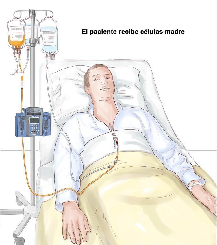 tratamiento con celulas madre costo